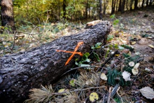 Vyriausybė pritarė Prezidentūros siūlymui dėl mažesnių maksimalių miško kirtimų plotų