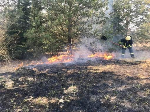 Klaipėdos rajone užsidegė miškas