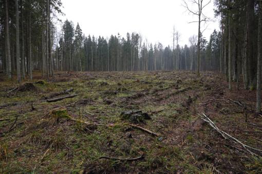 Aplinkos ministerija siūlo mažinti kirtimus saugomų teritorijų miškuose