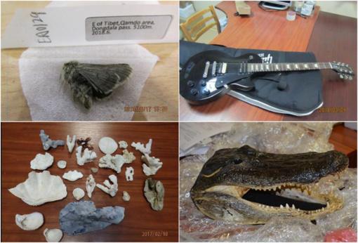 Muitinės kriminalinė tarnyba primena: nesivežkite krokodilo