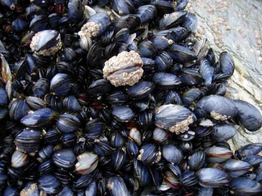 Britanijos pakrantėse – mirtinai pavojingi kirminai (nuotraukos)