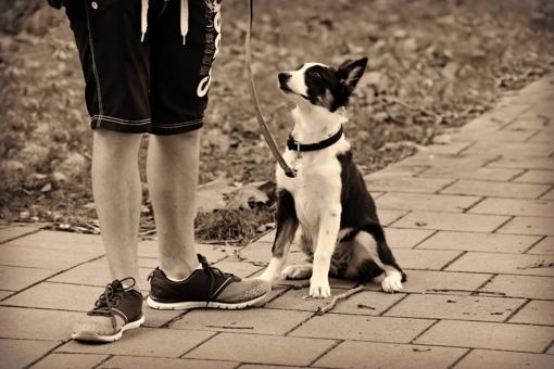 Jurbarke užpultas žmogus, priežastis – šuniukai