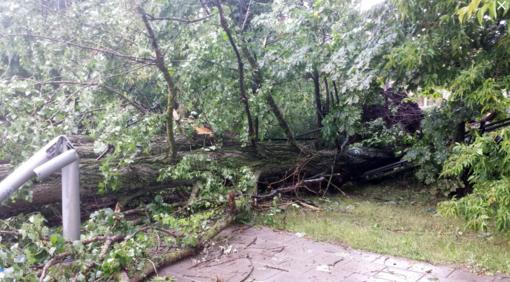 Ugniagesiai 15 kartų vyko šalinti vėjo nuverstų medžių
