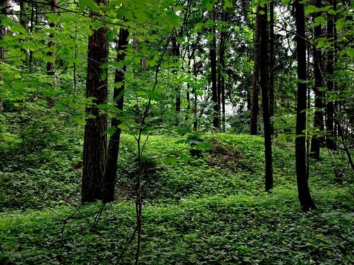 Pinigų reikalavo smurtaudamas miške