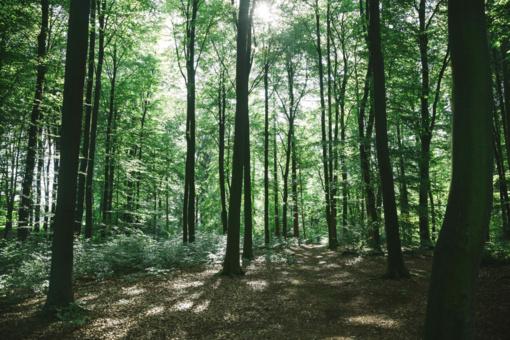 Didžiausi miško savininkai Lietuvoje: skandinavai aplenkė naująjį apribojimą