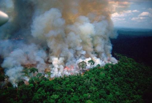 Liepsnoja Amazonės džiunglės: nuo dūmų San Paule diena virto naktimi