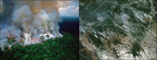 Liepsnojančių Amazonės miškų dūmai pasklido po pietinį pusrutulį: matoma net iš kosmoso (vaizdo įrašas)