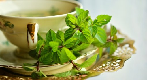 Sveikatos palaikymo ir atstatymo būdas– augalai