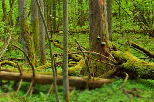 Laisvės piknike – diskusijos apie Punios šilą ir 6-tąjį masinį rūšių nykimą