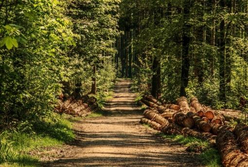 Iš miško gelbėtas negalintis pajudėti žmogus