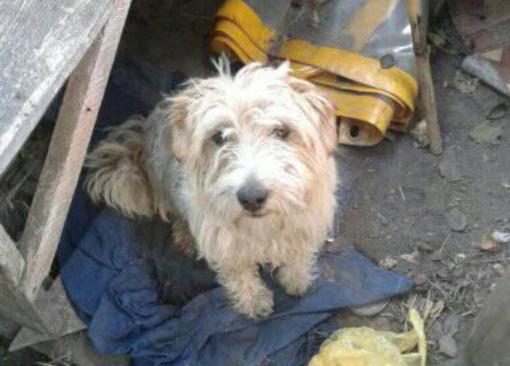 Neįtikėtinas žiaurumas: šunį švystelėjo pro automobilio langą