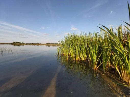 Atlikti tyrimai parodė ar galima maudytis Akmenės rajono tvenkiniuose