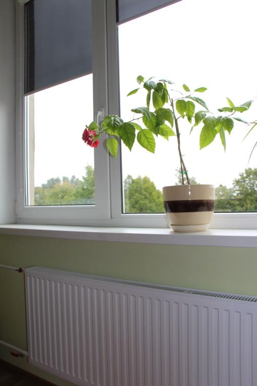 Švarios šildymo ir karšto vandens sistemos leis sutaupyti šilumą