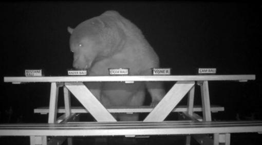 Medų vogusius lokius bitininkas slapta įdarbino: eksperimentas pavyko puikiai (vaizdo įrašas)