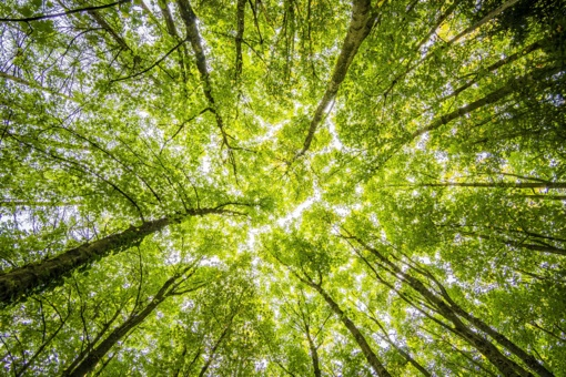 Švenčionių rajone užvirtęs medis mirtinai sužalojo vyrą