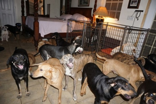Siaučiant uraganui moteris namuose priglaudė 97 benamius šunis