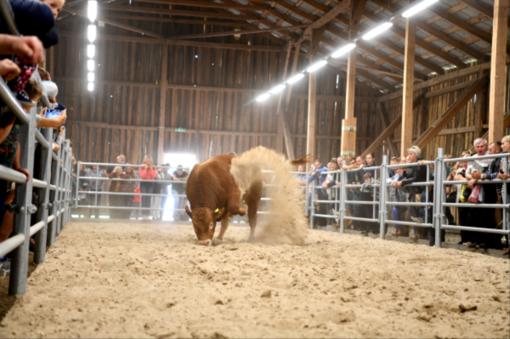 """Parodoje """"Panevėžio veislininkystė"""" siekia įpūsti kuo daugiau gyvybės gyvulininkystei"""