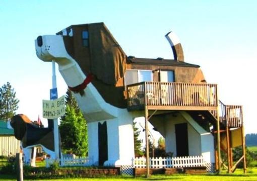Ši vieta sužavės šunų mylėtojus!