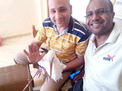 Gerumo gestas iš Afrikos: du vyrai išgelbėjo Lietuvos nacionalinį paukštį