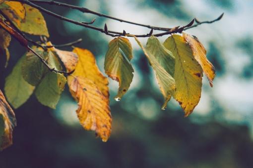 Ruduo įsidrąsins – ruoškitės permainoms