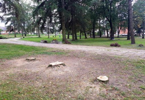 Šimtmečio aikštėje neliko menkaverčių medžių