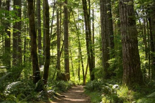 Šeštadienį į ekskursijas miškuose – nemokamais autobusais