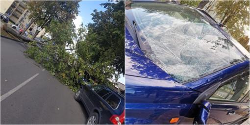 Druskininkuose ant automobilio užvirto medis