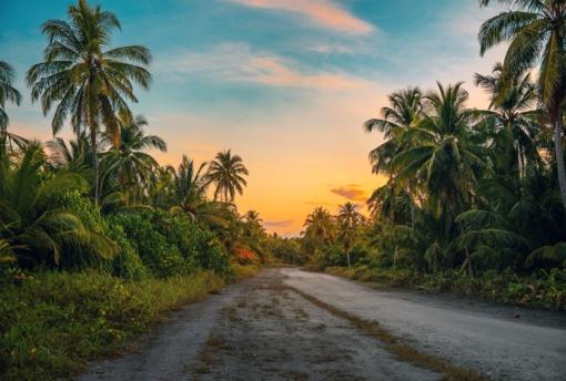 Palmių aliejus maišomas į degalus: šį faktą žino tik kas dešimtas lietuvis