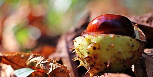Orai: ruduo įsibėgės – grybžtels šalnos