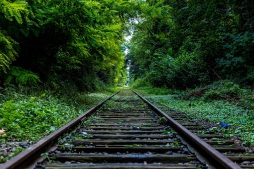 Australijoje koją susilaužęs keliautojas išsigelbėjo šliauždamas per miškus