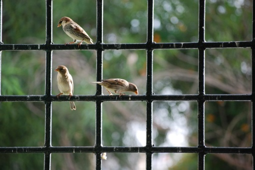 Paukštis įskrido pro langą: ką tai reiškia?