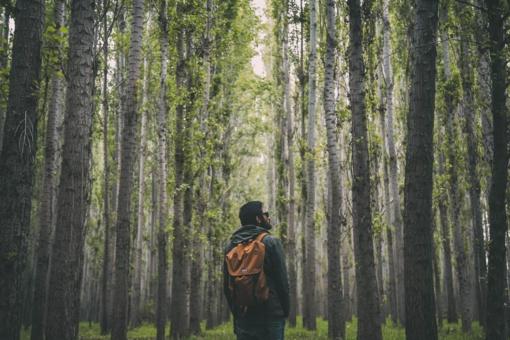 Bendrasis pagalbos centras: grybavimui ar uogavimui miške reikia pasirengti