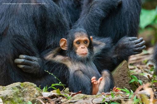 Juokingiausios gyvūnų metų nuotraukos