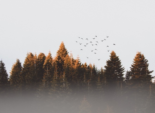 Miško pardavimas