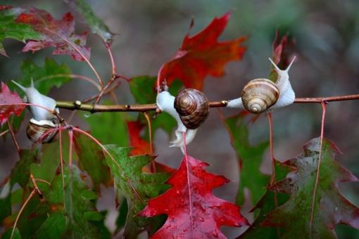 Orai: spalvingą rudenį merks lietus, tačiau jau neilgai