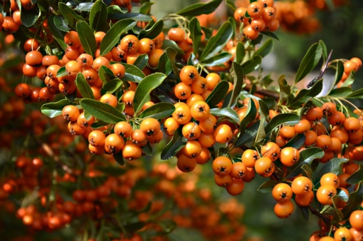 Rudens derlius ne tik ant stalo, bet ir kosmetinėje