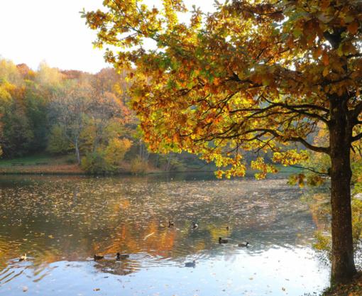 Šilta oro masė pirmadienį į šalį atplukdys malonią rudenišką šilumą