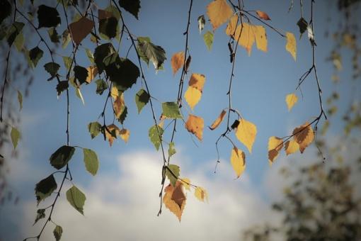 Orai: įspūdinga šiluma lepins visą savaitę