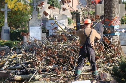 Kapinėse pjaunami medžiai