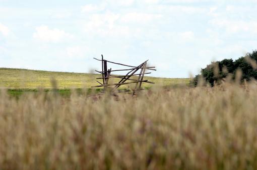 Ūkininkai nerimauja dėl klimato kaitos: plis ligos, kenkėjai, daugės ekstremalių reiškinių