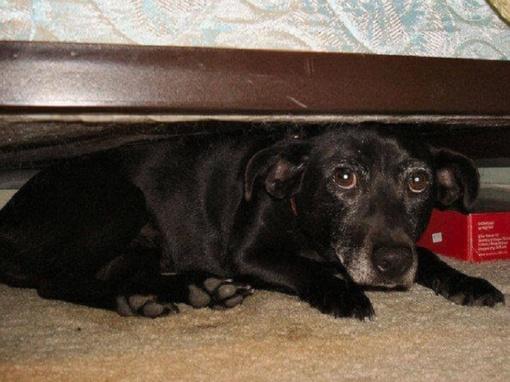 Už žiauriai atsikratytą šunį – į teisiamųjų suolą