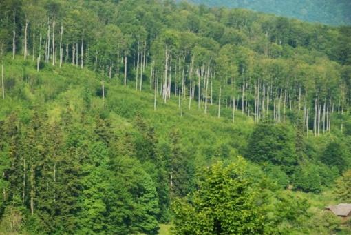 Siaubą keliančios girininkų mirtys Rumunijoje: norėjo tik apsaugoti miškus nuo kirtimų