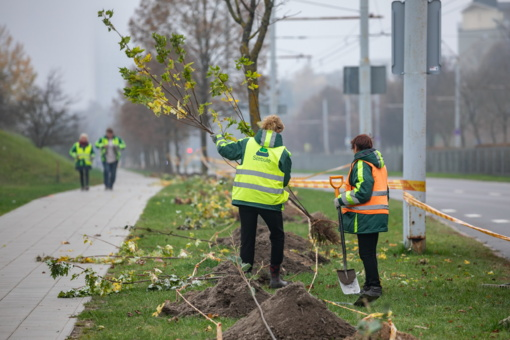 Vilniuje sodinama daugiau kaip 2 500 medžių ir krūmų (vaizdo įrašas)
