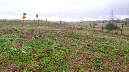 Uteniškis ekologiniame sode augina lazdynus