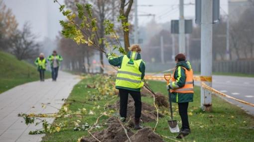 Sostinėje bus pasodinta 2500 įvairių medžių ir krūmų