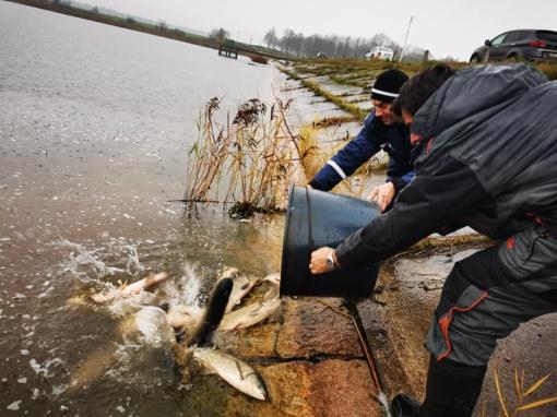 Dumblėjantį Arimaičių ežerą valys žuvys