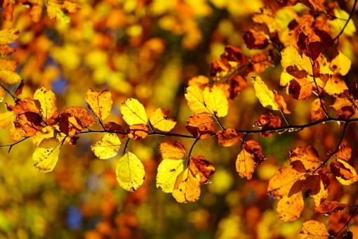 Orai: lapkritis stebins ir toliau – šiluma nesitrauks