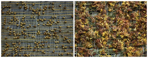 """Zarasų krašto muziejuje – Saulutės Katinienės tekstilės darbų paroda """"Ką kalba žolės"""""""