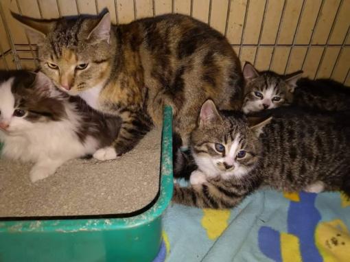 Namų ieško visas būrelis kačiukų