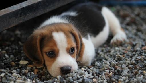 Užkasė gyvus mažus šuniukus